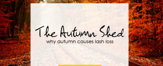 The Autumn Lash Shed