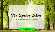 The Spring Lash Shed